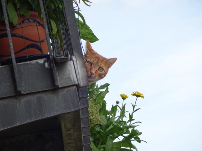 Nachbars neugieriger Kater